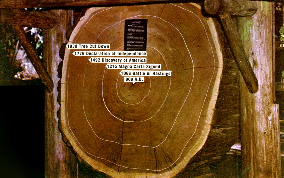 Oldest tree ring dating