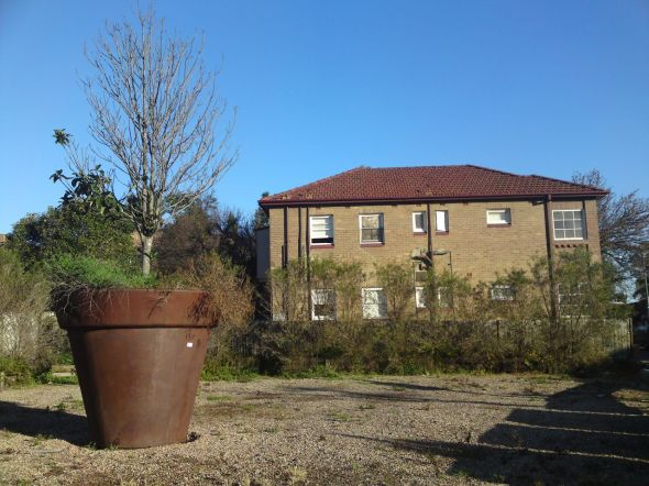 Ashfield Guerilla Gardeners