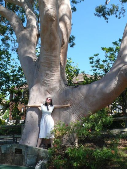 Lemon Scented Eucalypt Gordon Trunk