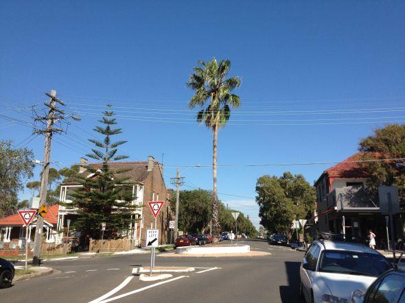 palm tree roundabout