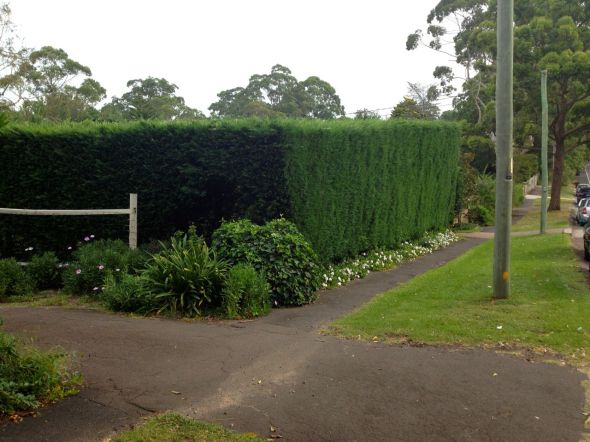 Solid Hedge